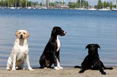 Stock Photo of three dogs