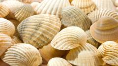 sea shells, seashell background 4k - stock footage
