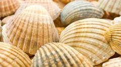 seashells, sea shells background - stock footage