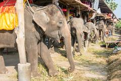 Elephant stable in ayuthaya, thailand Stock Photos