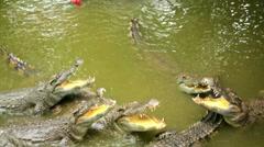 Tourist people feeding animal, Crocodile farm, vietnam Stock Footage
