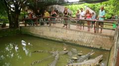 MEKONG DELTA, VIETNAM - MAY 2014: Crocodile farm Stock Footage