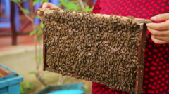 Holding honey beehive bare hand Stock Footage