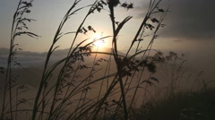 View of long grass in the wind at sunrise on the Little Adam's Peak in Ella. - stock footage