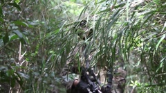 U.S. Marines Training in Jungle - Marine walks through brush - stock footage