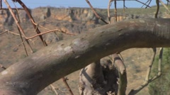 Dry tree branch Stock Footage
