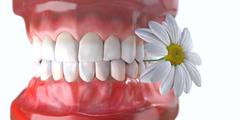 teeth with flower medicine dental health concept - stock photo