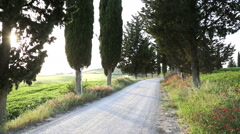 Cyclist morning ride cypress trees countryside Tuscany Italy Stock Footage