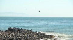 Seabird Migration Stock Footage