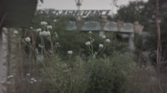 Flowers in breeze at abandoned theme park. 0556 Stock Footage