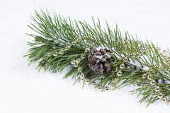 holiday fir branch on snow - stock photo