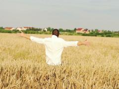 Happy young man running through wheat field NTSC Stock Footage