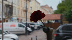 Single rose in a vase on the window on the background of a city street Stock Footage