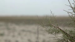 Plant in barren land Stock Footage