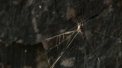 spider in the middle of it's web - stock footage