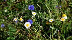 Small wildflowers slightly touched by the wind Stock Footage