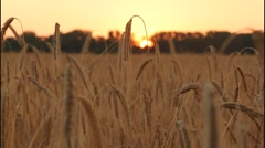 Field in the eventide Stock Footage