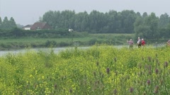Elderly enjoying view at river Rhine, Common Teasel and Mustard in foreground Stock Footage