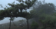 4K / HD Trees Thrash In Hurricane Wind - stock footage