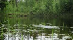Frog Mating Season In Little Lake, slider Stock Footage