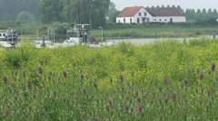 Cable ferry on river Rhine behind blooming Teasel and Black Mustard Stock Footage