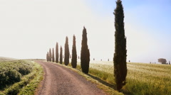 Cyclist ride dirt road cypress trees Italian summer Tuscany Italy Stock Footage