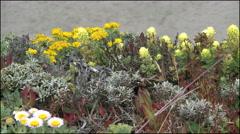 California coastal wildflowers Stock Footage