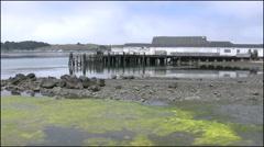 California Bodega Bay zooms to bird Stock Footage