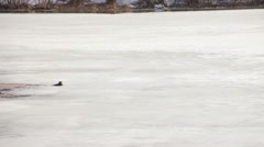 River otter on ice Stock Footage