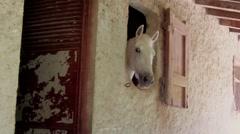 Horse Head on Barn Window Stock Footage