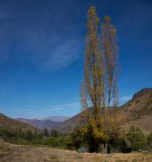 Autumn in the Andes - stock photo