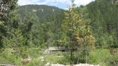 Bridge over Creek in forest Stock Footage