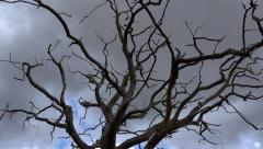Nature Background Dead wood tree stormy clouds Stock Footage