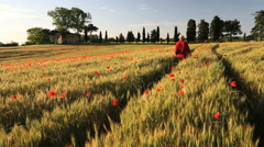 Poppy flowers barley Italian farmhouse male walking Tuscany Italy - stock footage