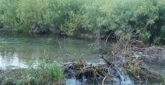 Pan Beaver Dam 4k Stock Footage