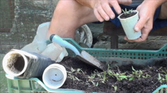 Farmer's Hands Planting Goji Stalks, Eco, Medicinal, Plant, Agriculture, Pan Stock Footage