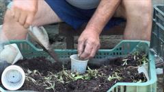 Farmer's Hands Planting Goji Stalks, Eco, Medicinal, Plant, Agriculture, Detail Stock Footage