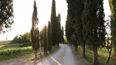 Male walking summer Italian cypress trees dirt road Tuscany Italy Stock Footage