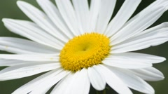 Close Up View of White flower Stock Footage