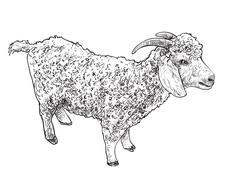 Angora goat-vector Stock Illustration