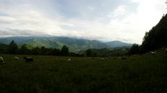 Flocks of sheep grazing on mountain meadows timelapse Stock Footage