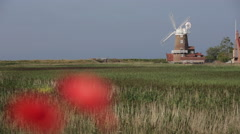 Norfolk - Cley Windmill with poppies. Stock Footage