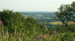 Distant view of Birmingham City with a foreground of trees, plants and grasses. Stock Footage