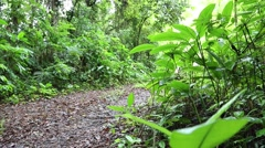 An 2014 Toyota Land Cruiser passes by on an offroad trail. Stock Footage