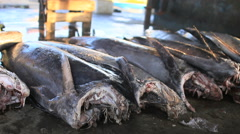 Large Headless Fish Covered in Flies at a Local Fish Market in Asia 1080 - stock footage