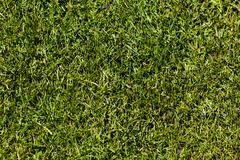 soccer pitch - stock photo