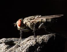Stock Photo of fly. macro