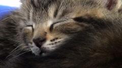 Tired tabby kitten Stock Footage