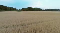 Flying over organic barley field Stock Footage