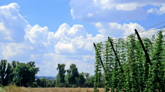 Landscape With Sky And Hop Garden, time lapse Stock Footage